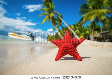 Seastar Or Sea Starfish Standing On The Beach Of Island