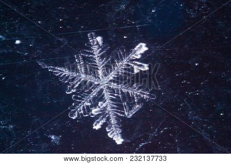 Real Snowflakes In The Winter Frozen In The Cold Layers Of The Atmosphere Heavenly Beauty Unique Liv