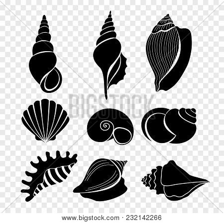 Vector Illustration Set Of Seashells Silhouettes Isolated On Transparent Background