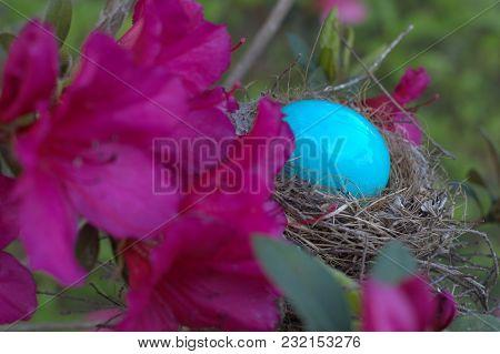 Blue Easter Egg In Bird Nest Behind Pink Azalea