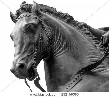 Bronze horse head isolated on a white background