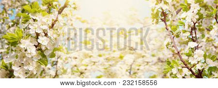 Beautiful Spring Nature Wide Background. Flowering Time Of Garden Trees. Panoramic Landscape Of Bloo