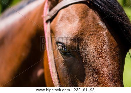 Profile Of Brown Horse, Harsh Shadows, Cunha, Sao Paulo