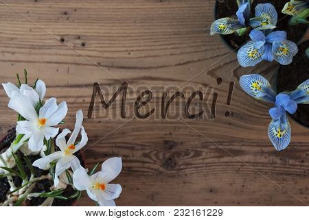 Wooden Background With French Text Merci Means Thank You. Spring Flowers Like Grape Hyacinth And Cro