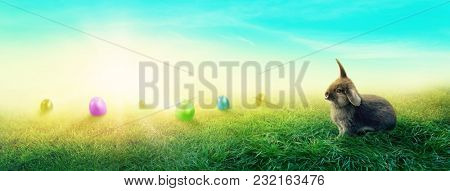 Spring meadow with a rabbit and easter eggs