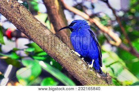 Pretty Blue Bird On A Wooden Branch.