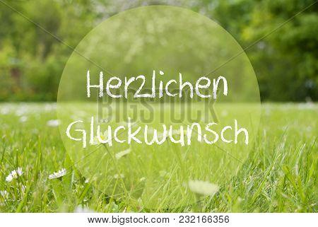 German Text Herzlichen Glueckwunsch Means Congratulations. Spring Or Summer Gras Meadow With Daisy F