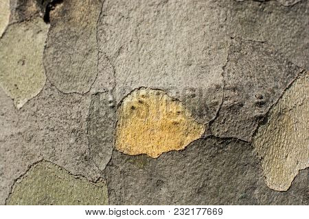 Close Up Tree Bark Texture As A  Wooden Background