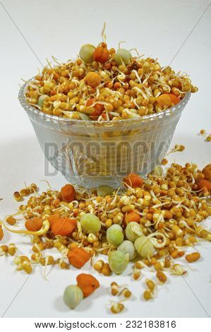 Close View Of Sprouted Beans In A Glass Bowl And Fallen Around The Same