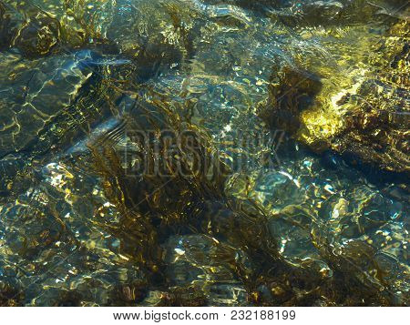 Grass On The Seabed Through Transparent Waves