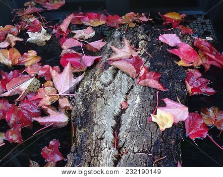 Autumn Colored Leaves In A Garden Pond With Tree Trunk