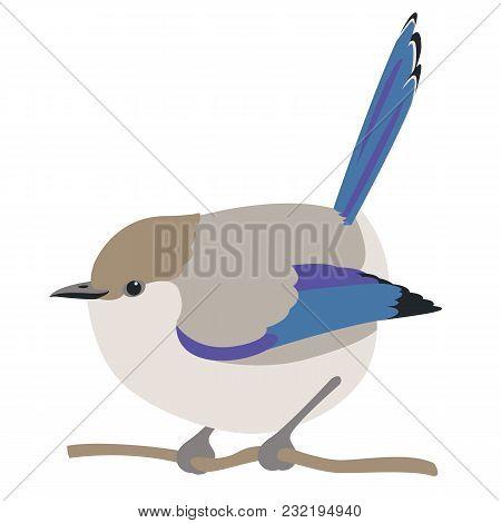 Fairy Wren Bird Vector Illustration Flat Style  Profile