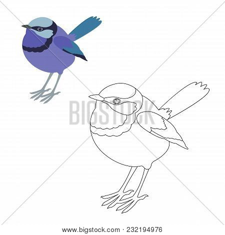 Fairy Wren Bird Vector Illustration  Coloring Page Outline