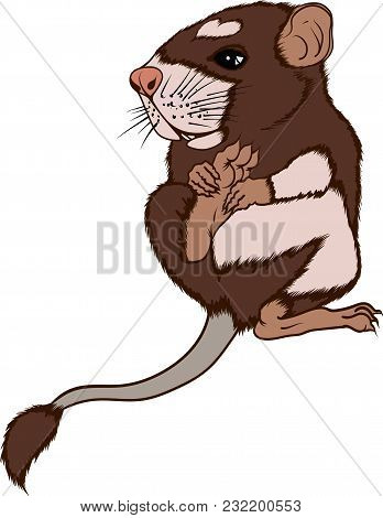 Cute Little Brown Field Mouse In Vector
