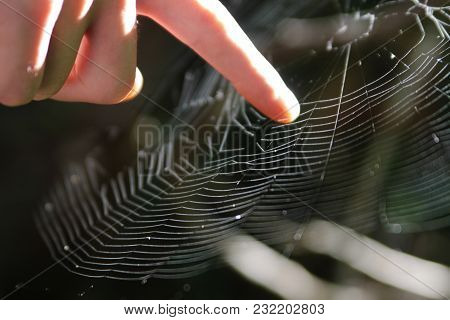 Web Touch. Macro View Of Man's Finger Touching Spider Web In Sun Lights. Circle Structure Cobweb.