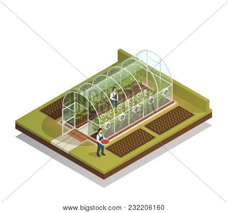 Tunnel Shaped Plastic Greenhouse Facility With Workers Watering  Plants And Fertilizing Seedlings Is