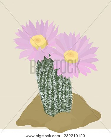 Cactus With Pink Flowers On The Light Background. Vector Illustration With Cacti.