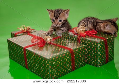 Two Cute Bengal Kittens Is Sitting Near The New Year's Gifts. Traditional Holidays.