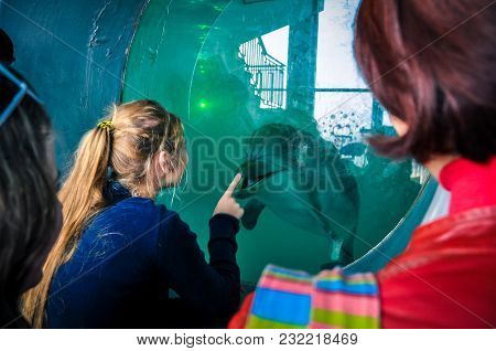 People Look At The Dolphin Through The Window Of The Dolphinarium Aquarium Window, The Pool. Happy M