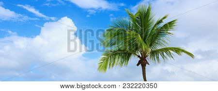 Beautiful Caribbean Sea And Green Palm Tree. Summer Sea Landscape As A Background. Holiday And Vacat
