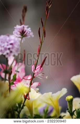 Flowers Of Petunia And Small Pink Flowers. Good Background For Greeting Card