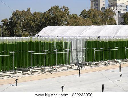 Algae Growing Plant In Vertical Transparent Plastic Cylinders