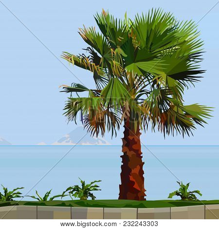 Painted Palm Tree On Green Grass Near The Sea In The Afternoon
