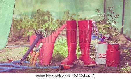 Gardening Tools Outdoor In Garden, Red Rubber Boots Water Can Blue Hose, Greenhouse In The Backgroun