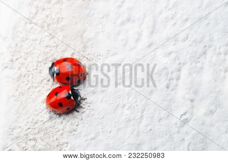A Pair Of Red Ladybirds With Black Spots, Facing In Opposite Directions On A Rough, White Stone Surf