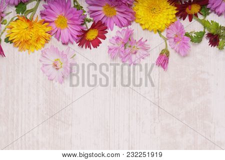 Top Frame Border Of Chrysanthemum Flowers On Light Wooden Background From Above.