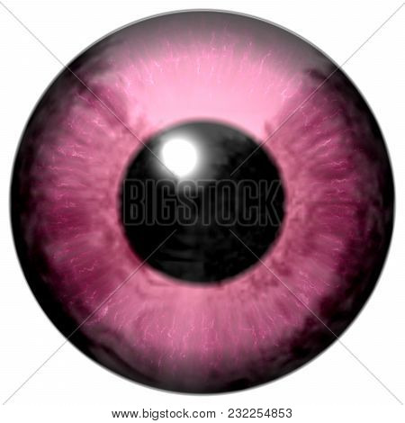 Detail Of Eye With Pink Colored Iris, White Veins And Black Pupil