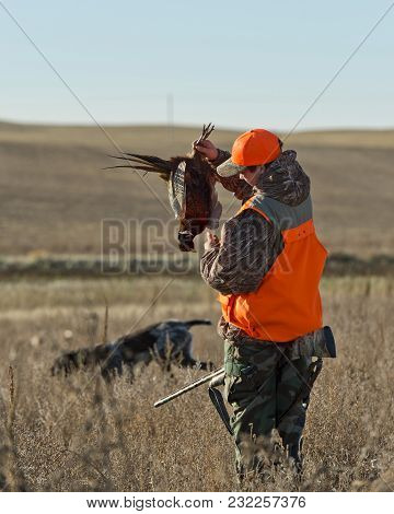 A Hunter In South Dakota With A Rooste Pheasant