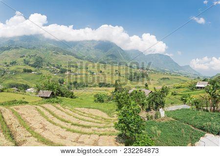 Harvest Season In Northern Vietnam On Terrace Fields Blue Sky