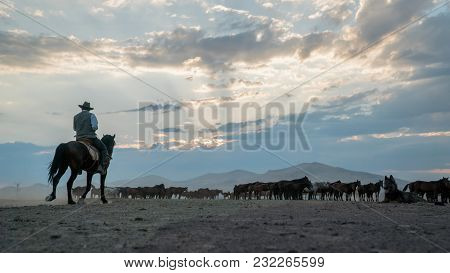 Kayseri, Turkey - August 2017: Unidentified Man On A Horse In A Field With Wild Horses