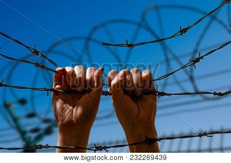 Two Hand Hanging On The Fence From Barbed Wire