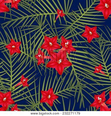 Ipomoea Quamoclit - Cypress Vine Flower On Navy Blue Background. Vector Illustration.