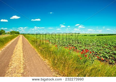 Road Along The Field And Blue Sky
