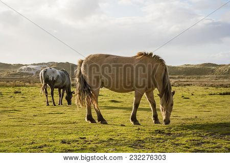 Horses On The Island
