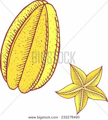 Starfruit Color Isolated Art.tropical And Exotic Fruit. Vector Illustration.