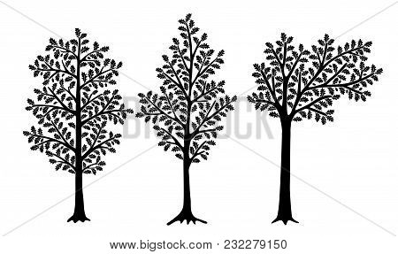 Set Of Stylized Oaks Isolated On White Background. Vector Illustration. Can Be Used For Interior Dec