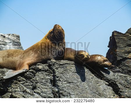 Sea Lions On Rocky Island Perfect Place To See A Lot Of Birds Chile