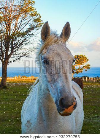 Wild Horse Closeup At Patagonia Landscape Chile South America