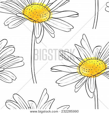 Vector Seamless Pattern With Drawing Daisy Flower, Floral Background, Hand Drawn Botanical Illustrat