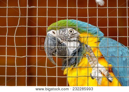 Closeup View Of Yellow And Blue Parrot Behind Grille