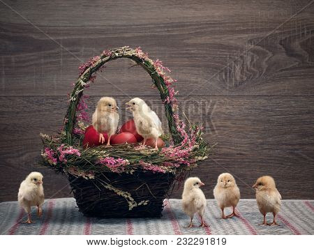 Beautiful Basket With Red Easter Eggs, And Many Chicks