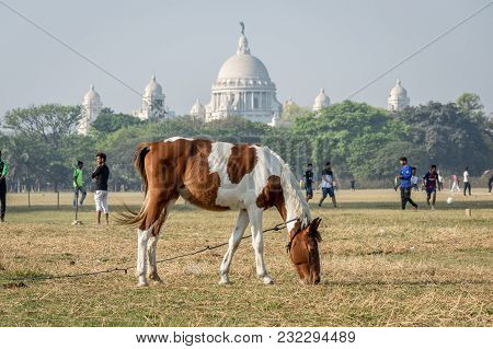 Kolkata Maidan, Kolkata, India - 11th Mar, 2018: A Horse Grazing At Maidan, The Largest Open Playgro