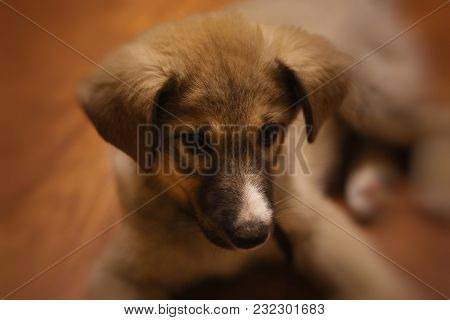 Portraits Of Brown Puppy. Dog On A Brown Background. Little Pet. Friend Of The Person. Thoughtful Do