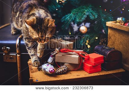 Cat Walks At Home Beautiful Christmas Background With New Year Daccor, Gifts, Cup And Old Boxes Of W