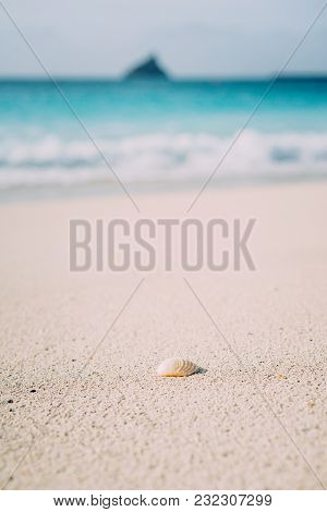 Seashell On Sandy Beach With Defokused White Foam Of Rolling Ocean Waves In Background. Tropical Bea
