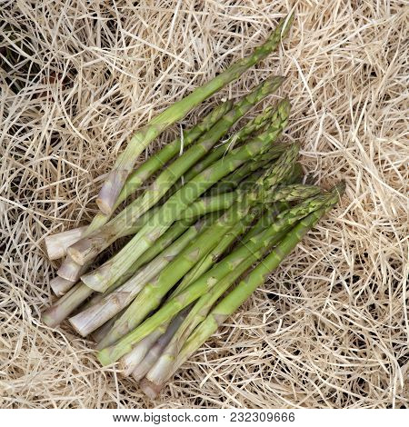 Fresh Asparagus In The Hay In The Garden